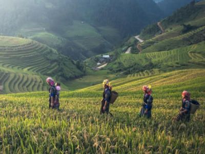 Scaling sustainable rice: Innovations from paddy to plate
