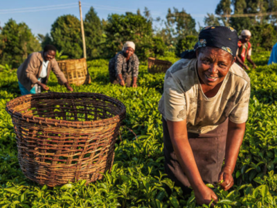 Creating 100% living incomes and wages in food systems