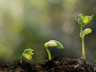 Accelerating and scaling investment in soil health
